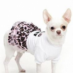 Lovely Pet Cloth, OEM Orders are Welcome, Suitable for Dogs, Made of Cotton