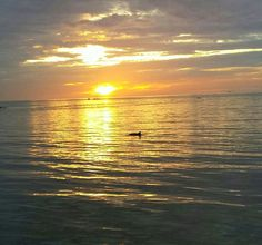 Dolphin in bay by Rod And Reel peir.
