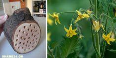 Κάντε Μερικές Τρύπες σε ένα Κομμάτι Ξύλου & Κρεμάστε το στον Κήπο Σας για να Αυξήσετε την Παραγωγή των Καλλιεργειών Σας - Μάθετε Γιατί Harry Potter Nails, Home And Garden, Herbs, Nature, Blog, Gardening, House, Plants, Naturaleza