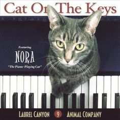 Nora  Cat on The Keys