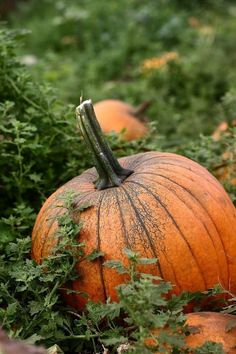 the pumpkin patch - Country Living #Autumn