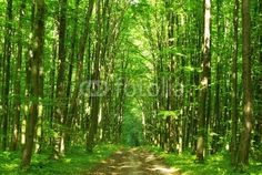 Wall Mural green forest - forest - nature • PIXERSIZE.com