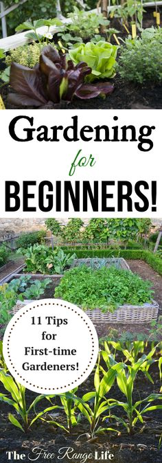 11 Tips for Beginning Gardeners | Are you a first time gardener? Are you lost on how to get a great garden? Gardening for Beginners: 11 tips for new gardeners!
