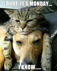Perros y Gatos, dogs and cats I Love Cats, Crazy Cats, Cute Cats, Funny Cats, Adorable Dogs, Fun Funny, Super Funny, Funny Good Morning Memes, Daily Funny