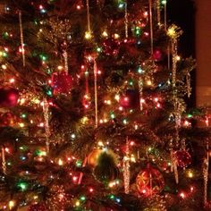 I could look at Christmas trees all day :)
