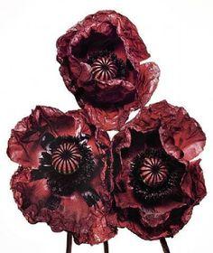 Le blog de SoVeNa » Irving Penn : The Art of Flowers