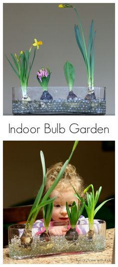 Learning about Spring Bulbs from Fun at Home with Kids (This would be cooler with water beads instead of the glass balls so you could see the roots more easily. Preschool Science, Science For Kids, Spring Activities, Activities For Kids, Garden Bulbs, Spring Bulbs, Ikebana, Pre School, Amazing Gardens
