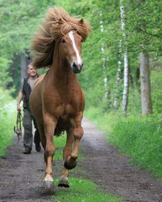 """I see a bridle.  Catch me if you can, Hoomin!"""