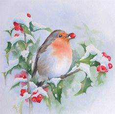Robin & Holly watercolor for Christmas Watercolor Bird, Watercolour Painting, Painting & Drawing, Watercolours, Christmas Bird, Christmas Images, Decoupage, Watercolor Christmas Cards, Christmas Paintings