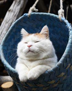 SHIRO in the basket. Yeah, so comfy....