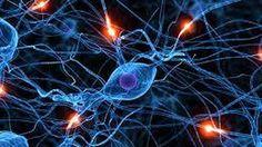 Sorpresa: nuestro cerebro funciona como internet
