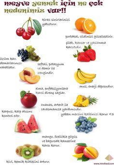 Blog — Intro food