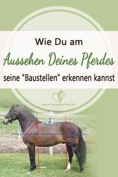 """Exterieurbeurteilung - Wie Du am Aussehen Deines Pferdes seine """"Baustellen"""" erkennen kannst!"""