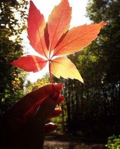 Autumn |               Marit Pearl Wivestad