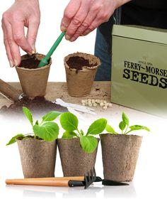 Seed Starting Soils Media Pots Trays Indoor Plantation Products