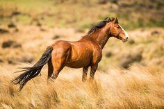(97) Watson Equine Photography - Photos