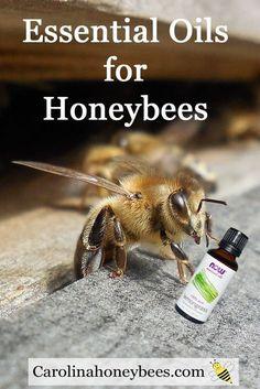 Essential Oils for Honeybees health is a popular management plan. Carolina Honeybees Farm