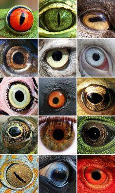 serie de ojos animales y humano vistos desde cerca