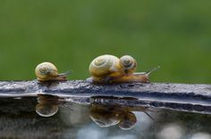 Photograph Snail family by Martin Cauchon on 500px