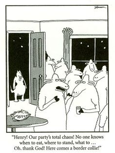 Gary Larson - The Far Side.I used to have border collies as a kid, and found this too funny! Far Side Cartoons, Far Side Comics, Funny Cartoons, Funny Comics, Cartoon Humor, Haha Funny, Funny Dogs, Funny Animals, Funny Stuff