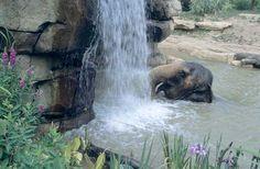 An Elephant Oasis.