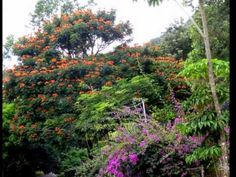 Rethinking Rehab in beautiful Panama. Full of flowers and birds - and sobriety!! Private pay alcohol rehab, 12 Step, holistic, out of country, affordable and tropical. Get the help you need now, before it is too late. CLICK HERE: https://www.serenityvista.com
