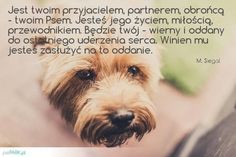 Dog Quotes, Boxer, Humor, Portal, Dogs, Animals, Quote, Animales, Animaux
