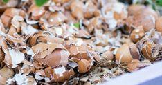 Tässä on tämän joulun puhutuin herkku – Näin valmistat taivaallisen sahramijuustokakun Fungi, Gardening Tips, Flora, Stuffed Mushrooms, Make It Yourself, Vegetables, Decor, Mushrooms, Stuff Mushrooms