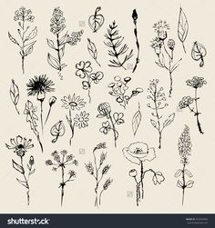 Floral set  hand drawn. vector