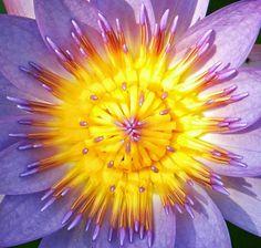 Flores del mundo