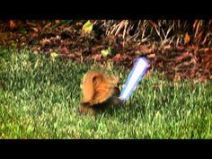 Jedi Squirrels! #StarWars
