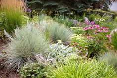 Drought Tolerant Front Yard Landscaping Ideas | Found on victorcicansky.blogspot.com  coneflower/lambs ear/yarrow