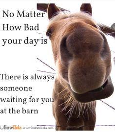 Always remember! #Funny #Horse #Meme