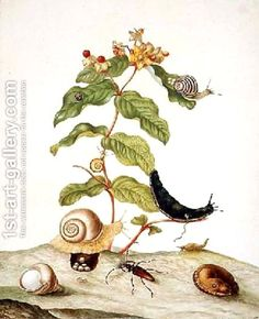 Hypericum Baxiforum with snails and a beetle 1695 by Maria Sibylla Merian