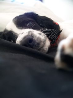 English springer spaniel named Ruby. Looks like my Nellie as a puppy.
