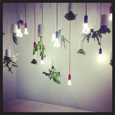 12 Best Indoor Plant Lighting Images