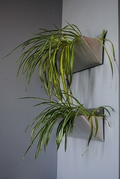 WALL PLANTERS..  for indoor plants, plant in a window box or planter and hang inside on the wall....very beautiful...ivy would work amazing