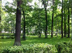 São Petersburgo - Ao longo dos vários hectares de parque, o Peterhof tem mais de 120 fontes, algumas escondidas para brincar com visitantes... cuidado para não se molhar! Imperdível!! Tour virtual