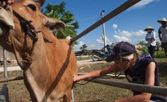 Job Opportunity: Become A Large-Animal Veterinarian - http://modernfarmer.com/2015/07/job-opportunity-become-a-large-animal-veterinarian/?utm_source=PN&utm_medium=Pinterest&utm_campaign=SNAP%2Bfrom%2BModern+Farmer