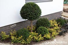 Co z tym ogródeczkiem począć Herbs, The Originals, Vertical Gardens, Houses, Plant, Lawn And Garden, Herb, Living Walls, Medicinal Plants