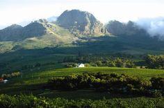 Haskell vineyards, Stellenbosch