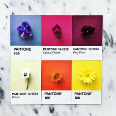 purple, fuchsia, plum, purple, cream, orange, yellow