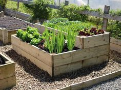 Raised Vegetable Beds - stepped level timber planter