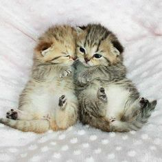 Oh my goodness these kittens are so adorable