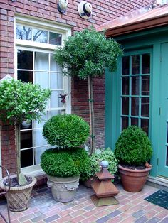 Atlanta author, Pamela Crawford, offers best tips for container gardens. Consider using trees and shrubs for a more traditionally elegant container garden.