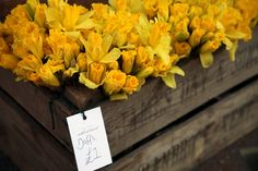 Happy St. David's Day from Liberty London