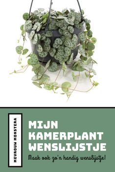 Hebben jullie ook kamerplanten die jullie nog graag willen? Maak ook een kamerplant wenslijst, handig voor jezelf en inspirerend voor anderen! #plantwishlist #kamerplanten #planten #planten #indoorplants #indoorgreen #urbanjungle #plantblog #blog Sprouts, Cabbage, Vegetables, Plants, Cabbages, Vegetable Recipes, Plant, Brussels Sprouts, Veggies