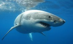 Is Your Makeup Killing Sharks?