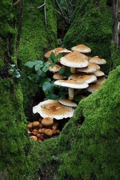 Mushrooms in a Tree Trunk