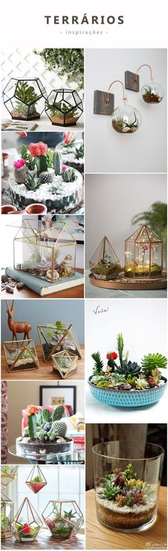 Teacup Mini Gardens Ideas to create your own Mini Fairy Terrarium Gardens with these miniature terrarium gardens, small water gardens, or combine the both. Garden Terrarium, Succulent Terrarium, Cacti And Succulents, Planting Succulents, Planting Flowers, Flowers Garden, Decoration Plante, Flower Garden Design, Cactus Y Suculentas